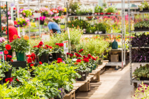 Abundance of colorful flowers at the garden center in Early Summer.
